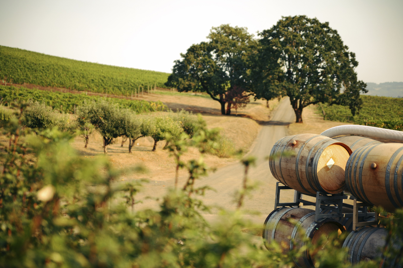 vineyard_4